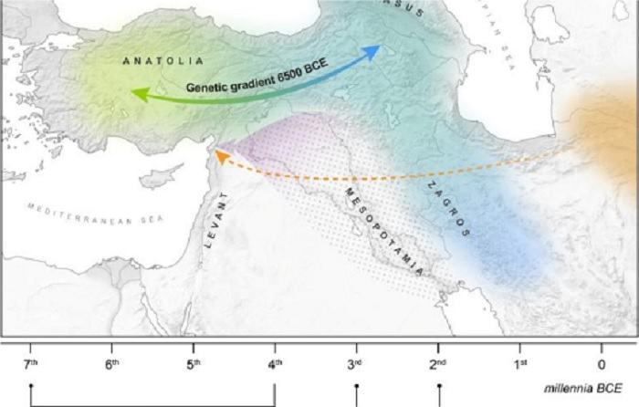 'Lady in the well' sheds light on ancient human population movements