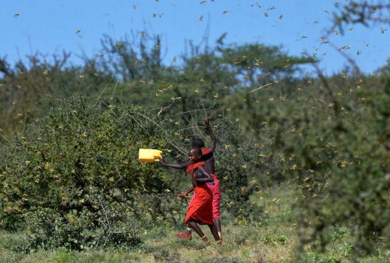 In midst of pandemic, East Africa braces for another locust invasion