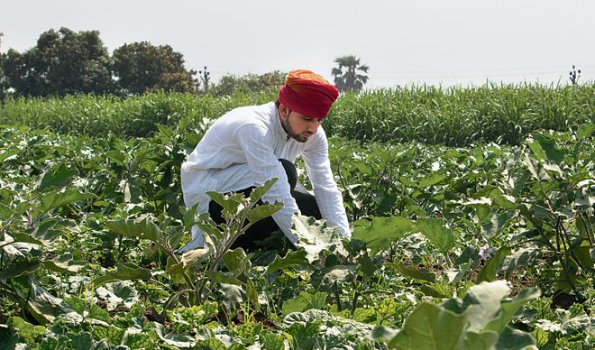 Farm reforms may hit Punjab's tax collection