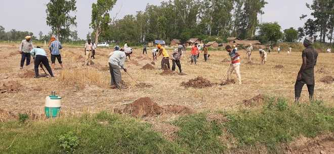 Encroachments removed from forest land