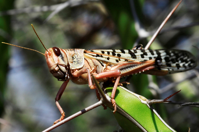 Farmers briefed on steps to tackle locusts in Bathinda