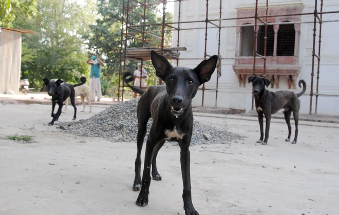 Govt fails to tackle stray dog menace in villages