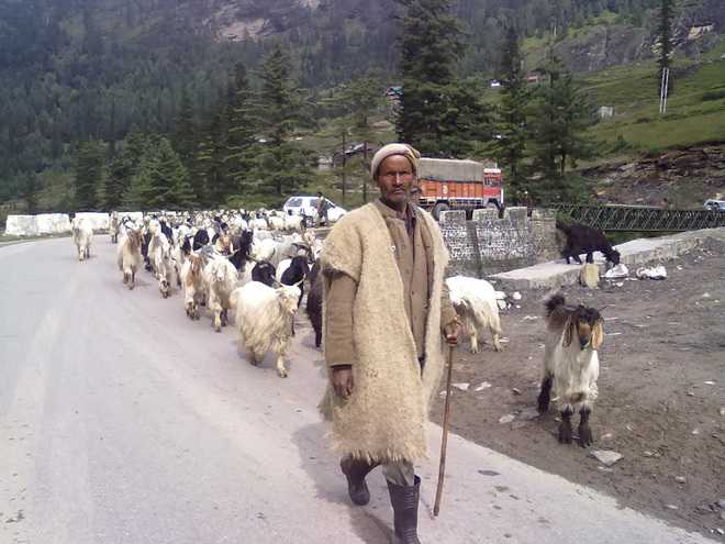 Efforts made to protect shepherds: Himachal Government
