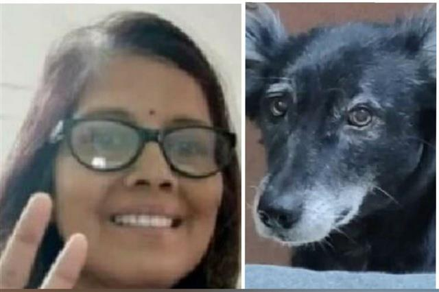 Bereaved dog jumps off fourth floor in Kanpur after master passes away