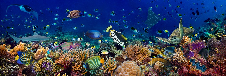 Can you swim through these questions on marine life ?