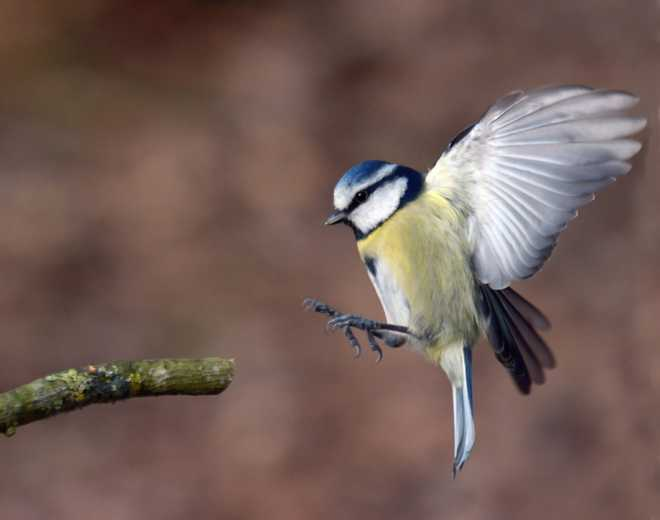 Ai: Scientists create AI tool to identify individual birds