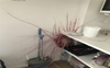 Woman returns home to find potatoes with metre-long 'tentacles' invading her kitchen, pictures go viral
