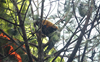 2 paragliders get trapped in pine trees in Dharamsala, rescued by locals