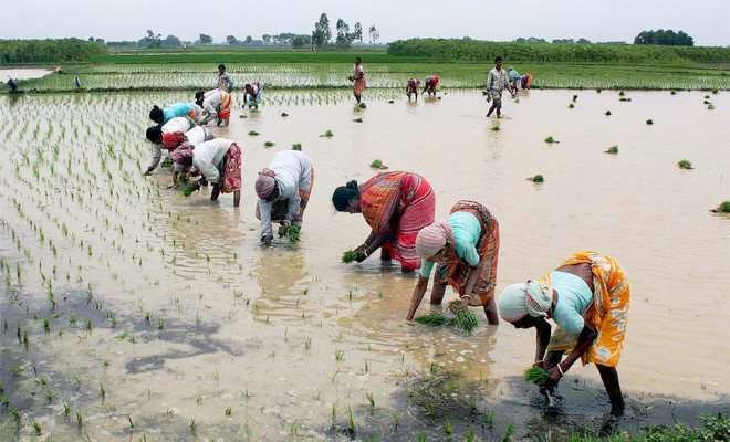 Increasing scarcity of labour set to compound problems of farmers