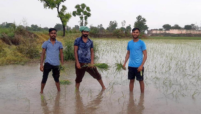 No classes, Punjab students toil in fields to help parents