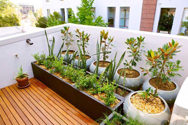 Bloom Amid Covid Gloom Home Gardening Fills Up Lockdown Days