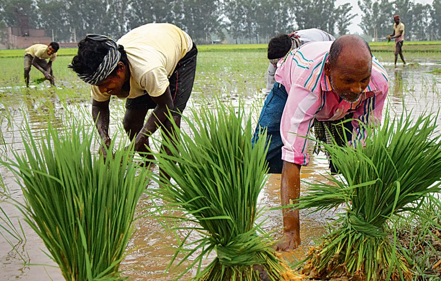 Farm labourers' debt up by 61 per cent in 30 years in Punjab: Study