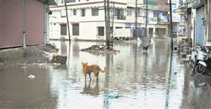 Rain exposes Patiala Municipal Corporation's claims