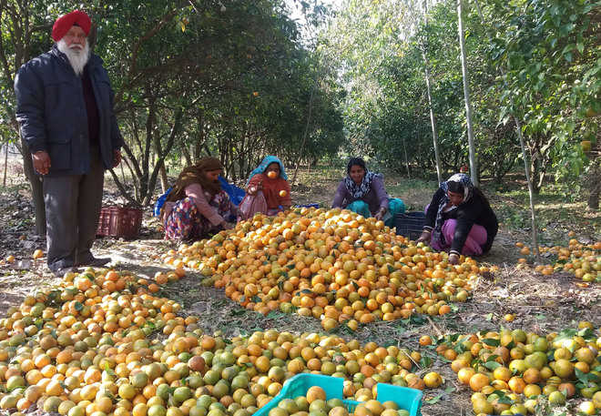 Minister wants 'kisan rail' for kinnow growers