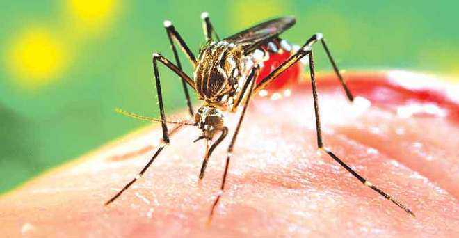 Patiala reports first dengue case of the season