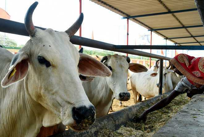 Nuh resident thrashed by cow vigilantes