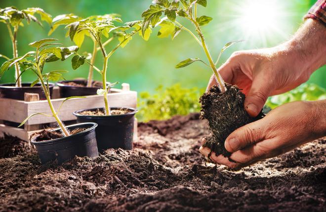 Design your garden anew