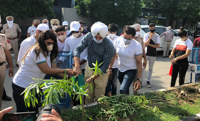 'Plant 10 saplings instead of 10K, but ensure their survival'