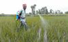 Pesticides : Viability of substitutes