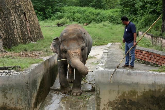 'World's Loneliest Elephant' On His Way to Freedom Finally
