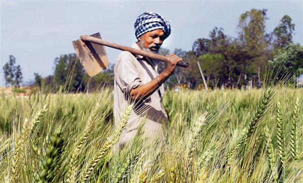 Wheat MSP hiked by Rs 50, Congress says not enough