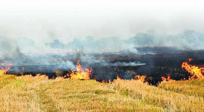 Punjab govt appoints 8,000 nodal officers, sets up call centre to check stubble burning