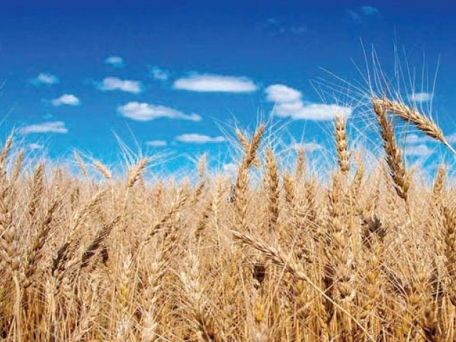 Farmers disappointed over 'meagre' hike in rabi crops MSP