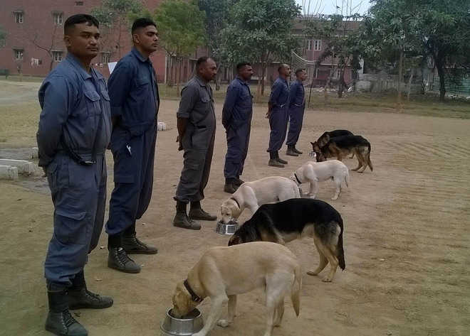 ITBP setting up retirement home for its K-9 veterans