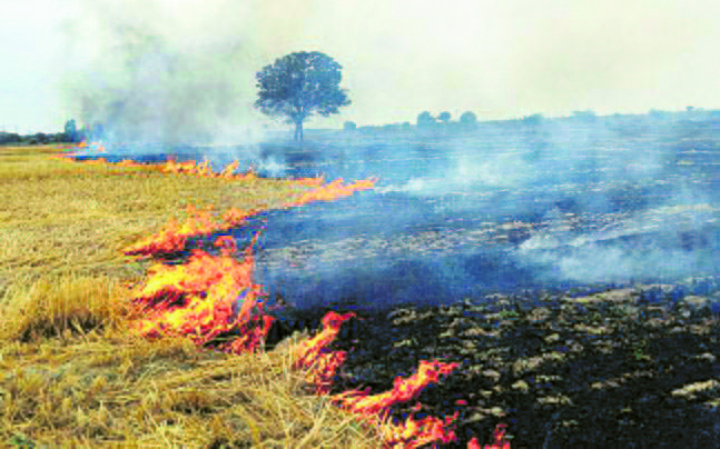 8K nodal officers to check farm fires in Punjab