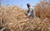 Centre announces MSP for 6 crops; Rs 50 increase for wheat