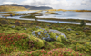Warming temperatures driving Arctic greening: Study
