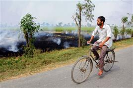 Delhi High Court notice to govt on farm fires