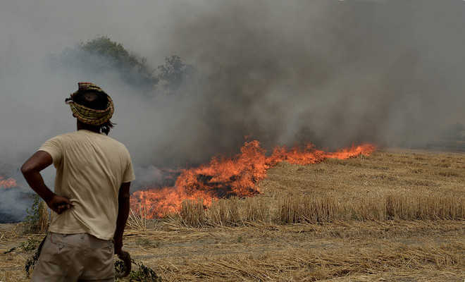 15 farmers fined for stubble burning