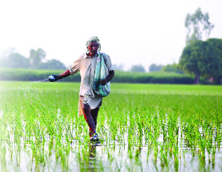 Agriculture university to educate farmers on pesticide use