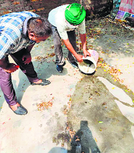 Dengue spreads its tentacles in Patiala district