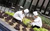 Restaurants are turning their backyards into kitchen gardens