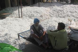 In Malwa, cotton selling below MSP