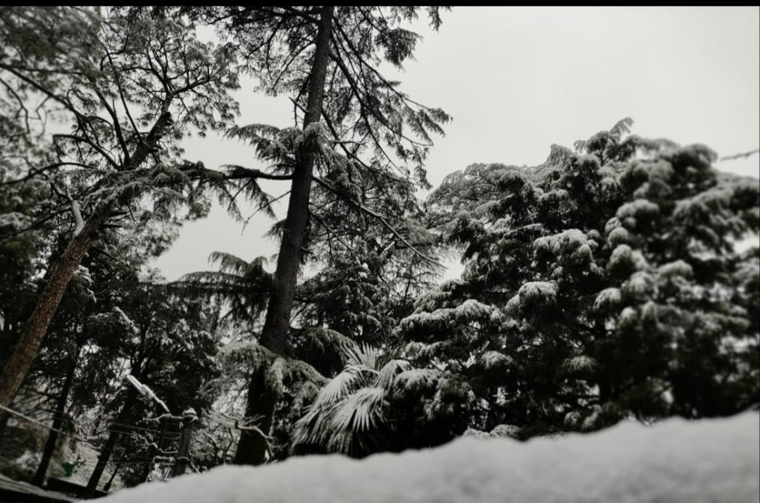 Kasauli and Dagshai in Himachal Pradesh on Thursday received season's first snowfall. Follow PTC News for more updates...